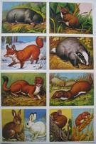 Scrap Relief Pictures  24 x 16 cm