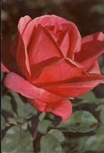 Picture postcard  14,5 x 10 cm