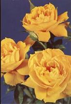 Bloemen  14,5 x 10 cm