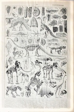 Orgineel blad uit Larouse - Paléontologie 28 x 18 cm