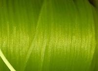 Schnur- hellgelb 2 mm